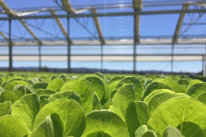 Agrarian Enterprises In The Lipetsk Region Plan To Raise Their Production  Of Greenhouse Vegetables To 190,000 Tonnes Per Year By 2020, As The  Regional ...